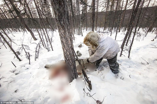 Theo chân những người thợ săn ở Siberia đi lột da chó sói - Ảnh 3.