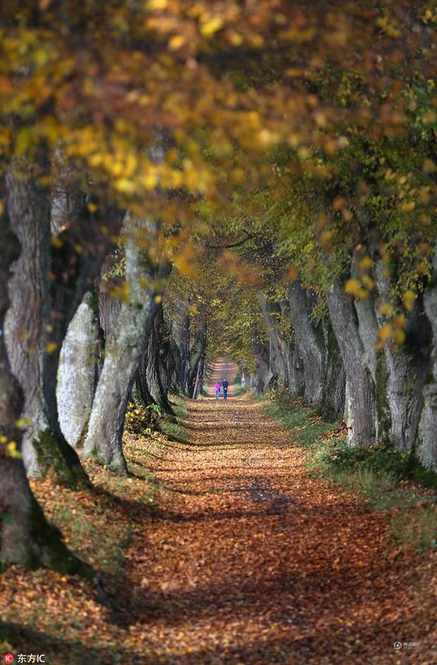 Những bức ảnh thiên nhiên tuyệt đẹp sẽ khiến bạn cảm thấy yêu mùa thu hơn bao giờ hết - Ảnh 4.