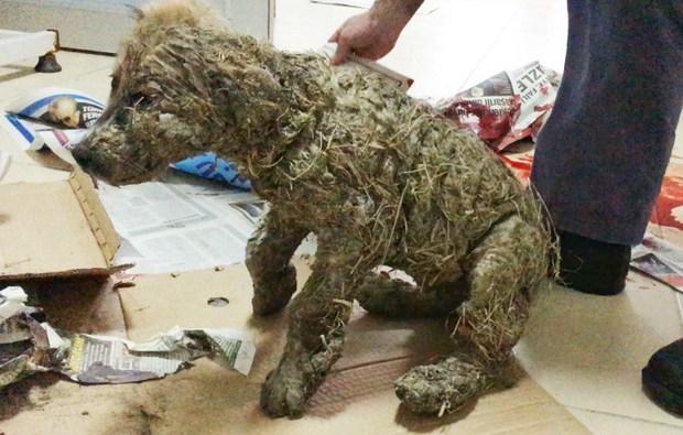Phẫn nộ cảnh chú chó con bị đổ đầy keo và bùn lên người để làm trò giải trí cho lũ trẻ - Ảnh 5.