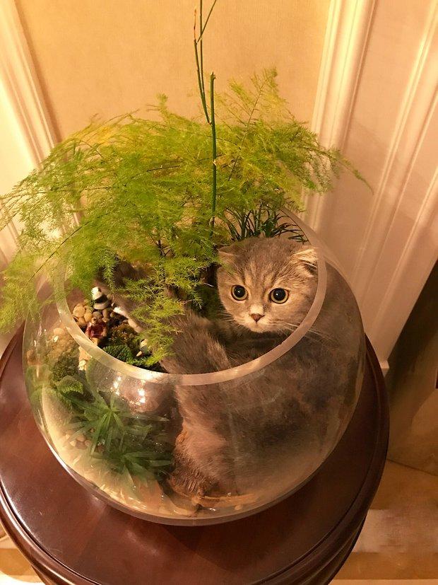 Nhà có một em cún nghịch, một bé mèo chảnh - cứ chí choé với nhau cũng phải! - Ảnh 33.