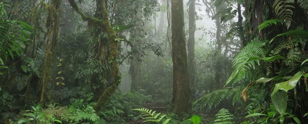 80.000 loài cây trên Trái đất sắp tuyệt chủng - Ảnh 1.