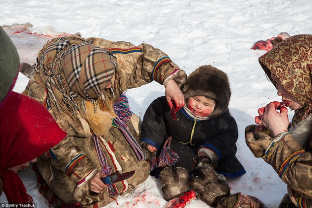 Chùm ảnh tuyệt đẹp về bộ tộc chuyên ăn thịt sống, uống máu tuần lộc - Ảnh 6.