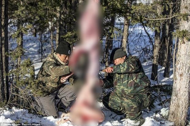 Theo chân những người thợ săn ở Siberia đi lột da chó sói - Ảnh 4.