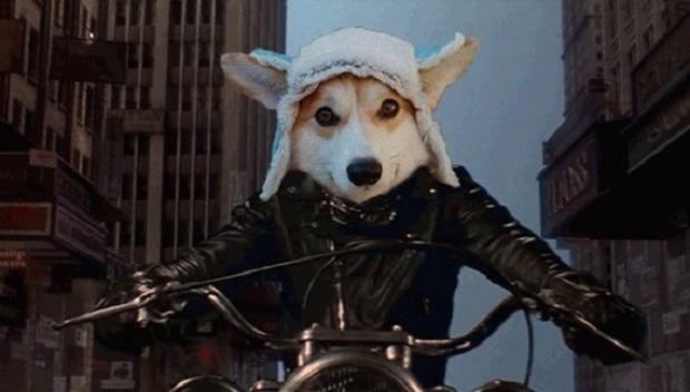 Đội mũ len quá dễ thương, chú chó Corgi đã bị các thánh chế ảnh cho lên thớt - Ảnh 10.