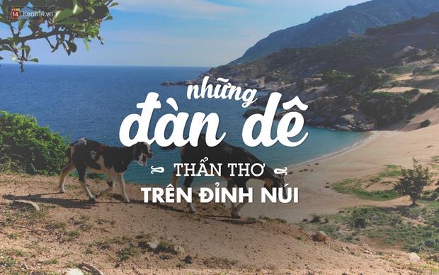 17 trải nghiệm tuyệt vời đang đợi bạn ở Ninh Thuận mùa hè này - Ảnh 5.