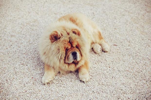 14 lý do chứng minh người yêu có thể không có nhưng chó nhất định phải có một con - Ảnh 1.