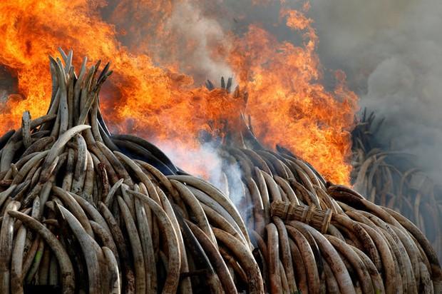 Báo động: 2/3 số động vật hoang dã trên Trái đất bị loài người hủy diệt trong 50 năm vừa qua - Ảnh 3.