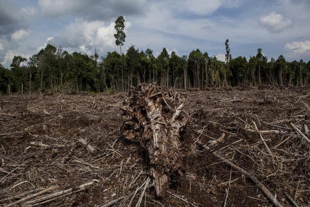 Báo động: 2/3 số động vật hoang dã trên Trái đất bị loài người hủy diệt trong 50 năm vừa qua - Ảnh 1.