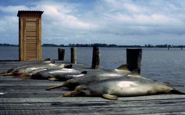 Báo động: 2/3 số động vật hoang dã trên Trái đất bị loài người hủy diệt trong 50 năm vừa qua - Ảnh 6.