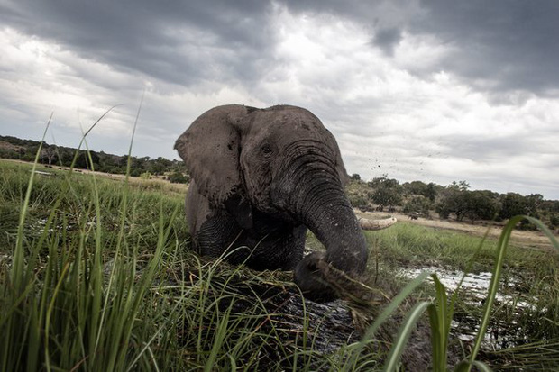 Báo động: 2/3 số động vật hoang dã trên Trái đất bị loài người hủy diệt trong 50 năm vừa qua - Ảnh 4.