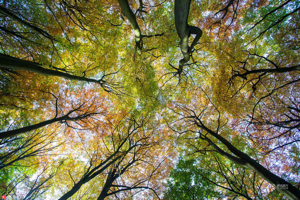 Những bức ảnh thiên nhiên tuyệt đẹp sẽ khiến bạn cảm thấy yêu mùa thu hơn bao giờ hết - Ảnh 6.