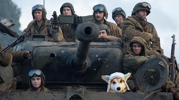 Đội mũ len quá dễ thương, chú chó Corgi đã bị các thánh chế ảnh cho lên thớt - Ảnh 12.