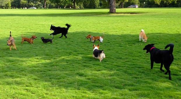 Ở nhiều nước trên thế giới, có bắt buộc phải rọ mõm chó khi dắt chúng đi dạo? - Ảnh 3.