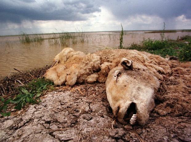 20 bức ảnh gây shock cho thấy nguồn nước trên toàn thế giới đang ô nhiễm nghiêm trọng - Ảnh 7.