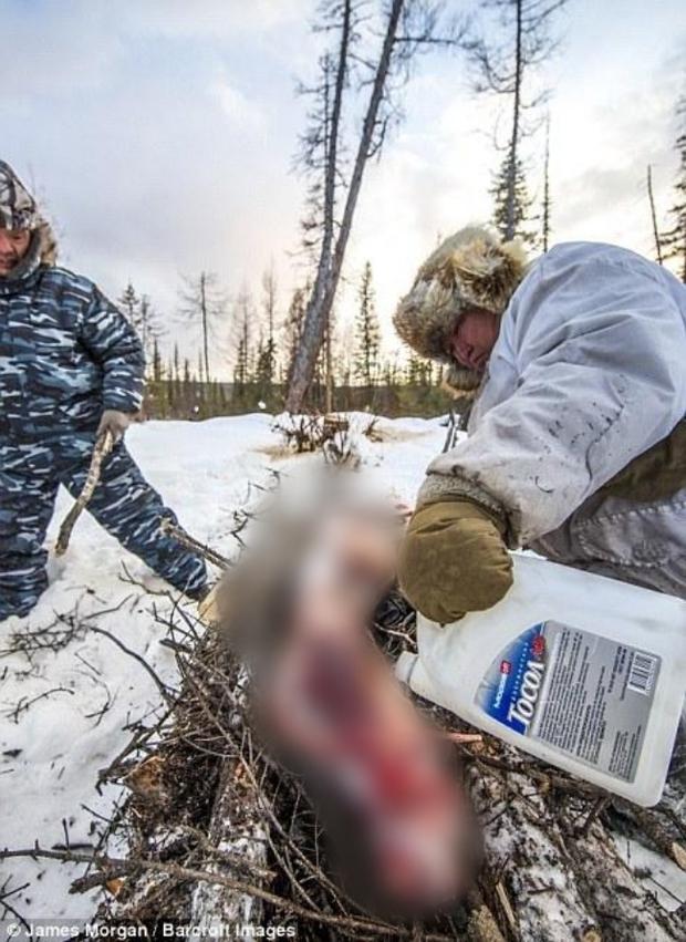 Theo chân những người thợ săn ở Siberia đi lột da chó sói - Ảnh 6.