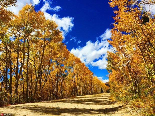 Những bức ảnh thiên nhiên tuyệt đẹp sẽ khiến bạn cảm thấy yêu mùa thu hơn bao giờ hết - Ảnh 7.