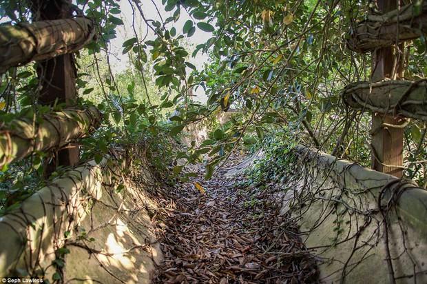 Hình ảnh ghê rợn bên trong công viên nước bỏ hoang 15 năm của Disney - Ảnh 8.