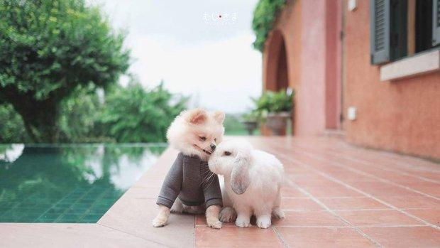 Gia đình nhỏ với trai đẹp, một em cún lúc nào cũng cười và hai chú thỏ lông xù siêu đáng yêu - Ảnh 26.