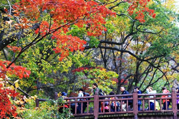 Những bức ảnh thiên nhiên tuyệt đẹp sẽ khiến bạn cảm thấy yêu mùa thu hơn bao giờ hết - Ảnh 8.