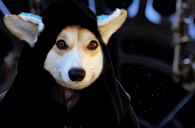Đội mũ len quá dễ thương, chú chó Corgi đã bị các thánh chế ảnh cho lên thớt - Ảnh 16.