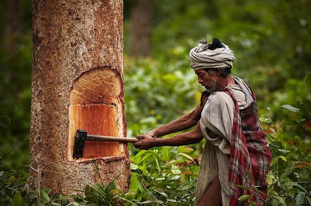 Chùm ảnh: cuộc sống của bộ lạc du mục cuối cùng tại Nepal - Ảnh 8.