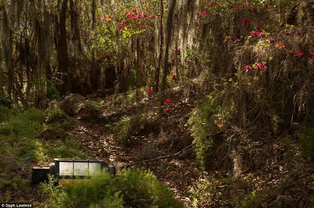 Hình ảnh ghê rợn bên trong công viên nước bỏ hoang 15 năm của Disney - Ảnh 9.