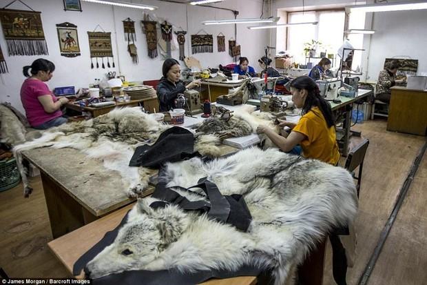 Theo chân những người thợ săn ở Siberia đi lột da chó sói - Ảnh 8.