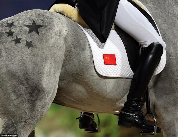 """Trai đẹp """"vạn người mê"""" từ bỏ nước Anh sang thi đấu cho đội đua ngựa Trung Quốc - Ảnh 9."""