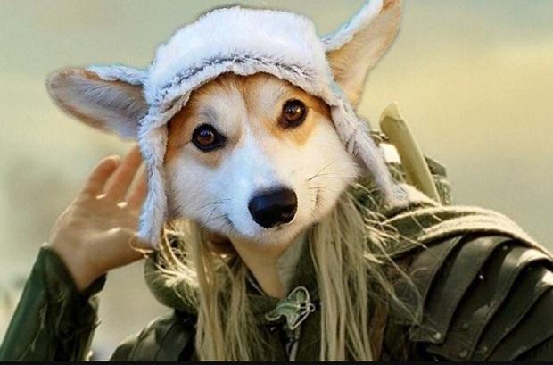 Đội mũ len quá dễ thương, chú chó Corgi đã bị các thánh chế ảnh cho lên thớt - Ảnh 18.