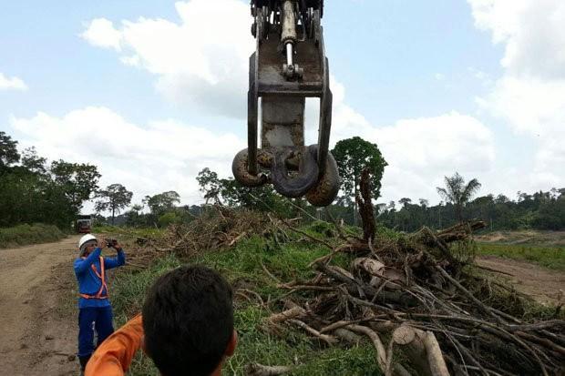Phát hiện con trăn lớn nhất hành tinh ở Brazil - Ảnh 3.