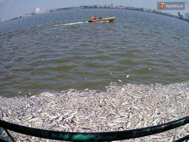 Cuộc sống của hàng nghìn người ven hồ Tây bị đảo lộn, hàng quán đóng cửa vì cá chết - Ảnh 2.