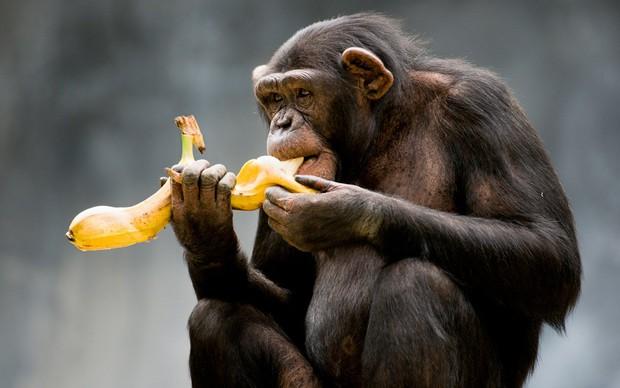 8 sự thiệt ít ai biết về loài khỉ - sinh vật nhí nhố nhất hành tinh - Ảnh 13.