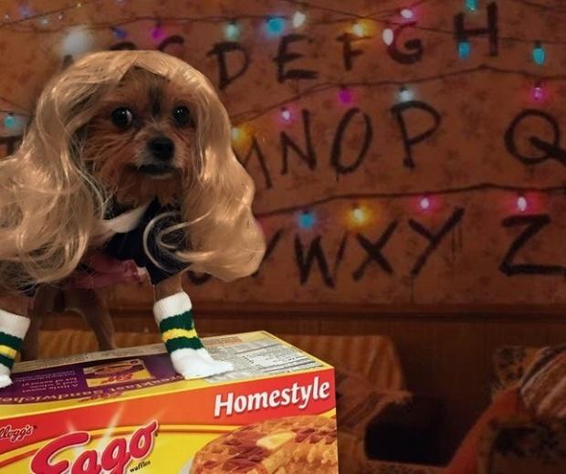 19 em chó cosplay dịp Halloween chất chơi hơn bạn nhiều - Ảnh 1.