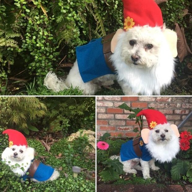 19 em chó cosplay dịp Halloween chất chơi hơn bạn nhiều - Ảnh 3.