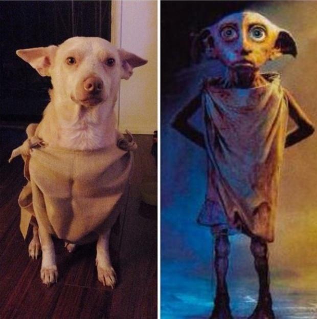 19 em chó cosplay dịp Halloween chất chơi hơn bạn nhiều - Ảnh 15.