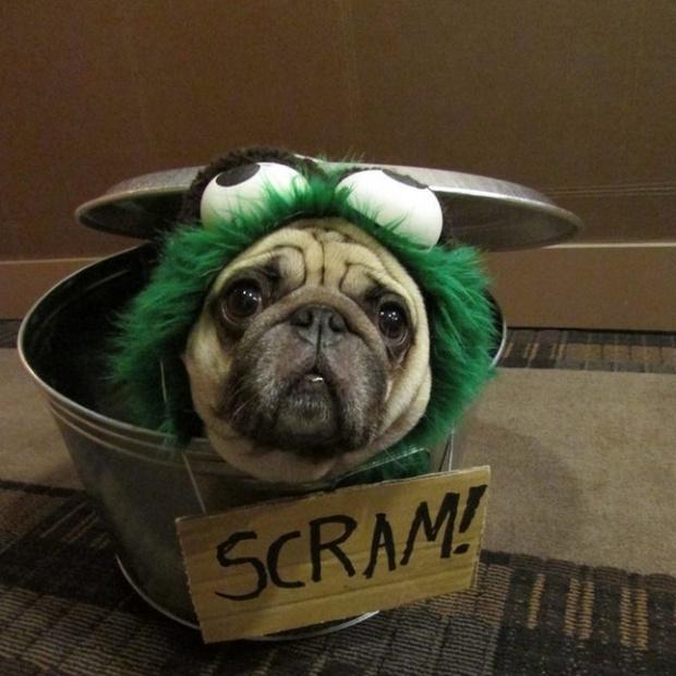 19 em chó cosplay dịp Halloween chất chơi hơn bạn nhiều - Ảnh 18.