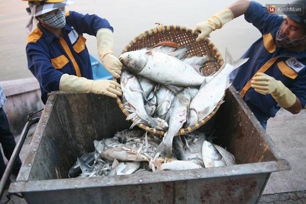 Những xác cá nặng hàng cân nổi lềnh bềnh - cảnh tượng đầy ám ảnh ở hồ Tây ngày hôm nay! - Ảnh 17.