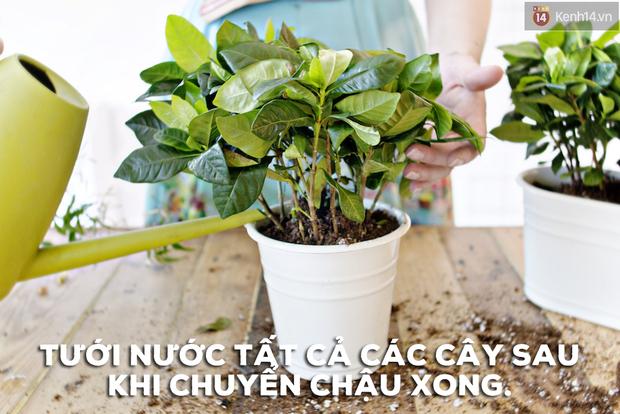 Biến vườn nhà bạn đẹp như quán cà phê chỉ trong một nốt nhạc - Ảnh 3.