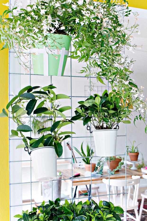 Biến vườn nhà bạn đẹp như quán cà phê chỉ trong một nốt nhạc - Ảnh 8.