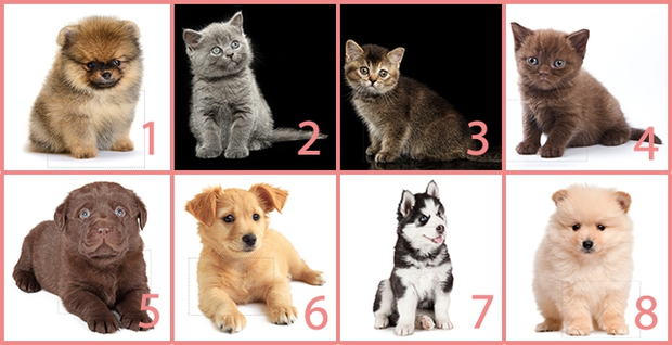 Nếu yêu động vật, bạn phải nhìn lông đoán được là chó hay mèo - Ảnh 2.