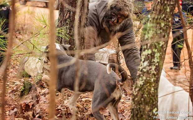 Lão Hạc vô gia cư thời hiện đại đau xót khi phải rời bỏ 31 chú chó cưng - Ảnh 2.