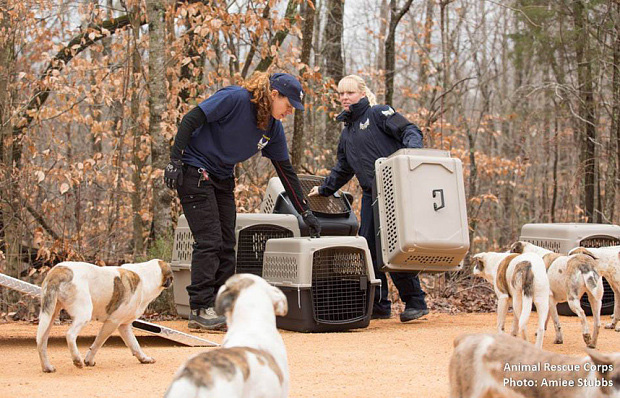 Lão Hạc vô gia cư thời hiện đại đau xót khi phải rời bỏ 31 chú chó cưng - Ảnh 3.