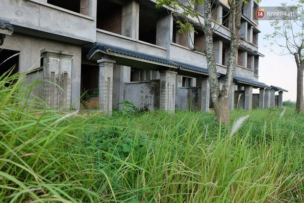 Biệt thự tiền tỷ biến thành nơi nuôi nhốt, chăn thả trâu bò ở Hà Nội - Ảnh 5.