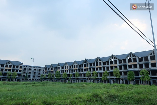 Biệt thự tiền tỷ biến thành nơi nuôi nhốt, chăn thả trâu bò ở Hà Nội - Ảnh 1.
