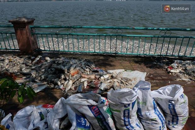 Cuộc sống của hàng nghìn người ven hồ Tây bị đảo lộn, hàng quán đóng cửa vì cá chết - Ảnh 6.