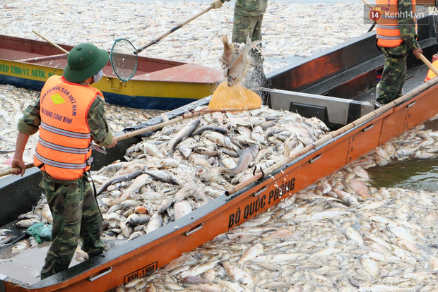Lượng cá chết hồ Tây đã lên đến 60 tấn, nhiều loài cá to nặng tới 4-5kg - Ảnh 5.