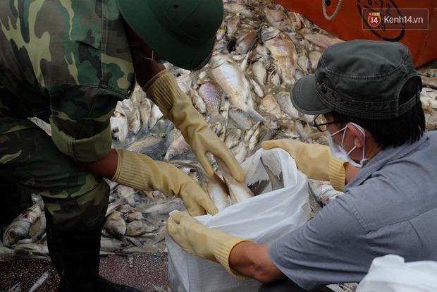 Lượng cá chết hồ Tây đã lên đến 60 tấn, nhiều loài cá to nặng tới 4-5kg - Ảnh 3.