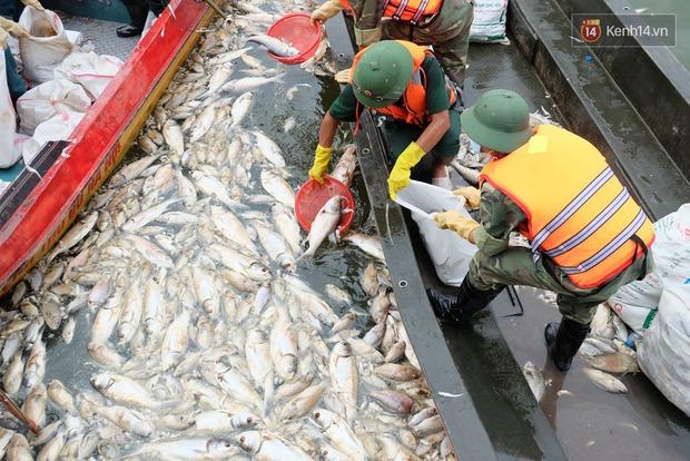 Lượng cá chết hồ Tây đã lên đến 60 tấn, nhiều loài cá to nặng tới 4-5kg - Ảnh 4.