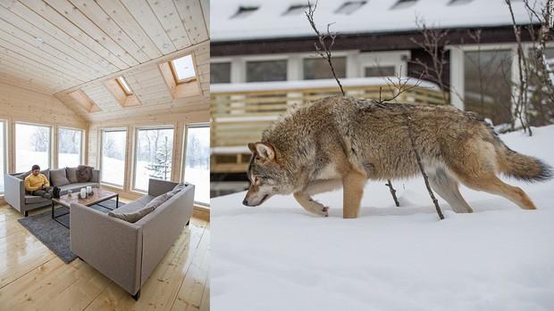 Khách sạn Na Uy nơi du khách được ngủ chung với sói - Ảnh 2.