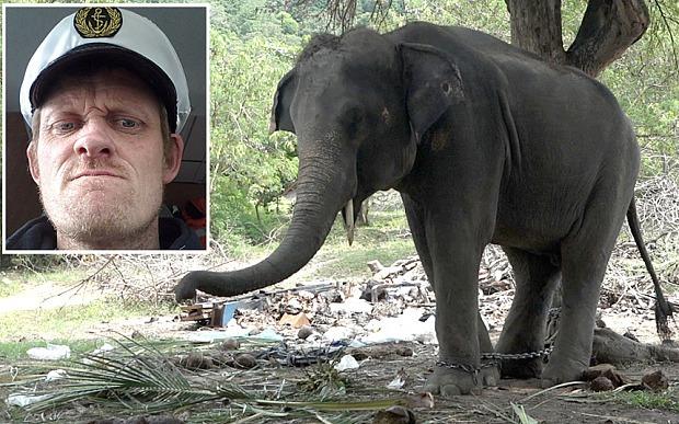 Câu chuyện đau lòng đằng sau những con voi hiền hòa tại Thái Lan - Ảnh 8.